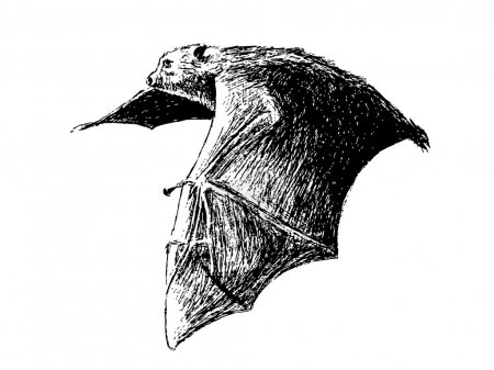 Flying fruit bat