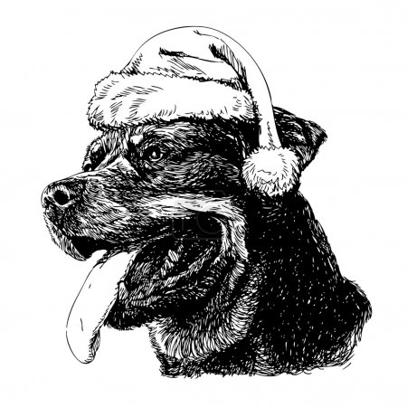 Illustration for Rottweiler with santa claus hat hand drawn vector , use for christmas background - Royalty Free Image