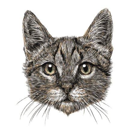 Illustration pour Petite main chat dessiné isolé sur fond blanc - image libre de droit