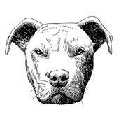 freehand sketch illustration of pitbull dog