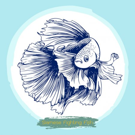 illustration of Betta splendens, Siamese fighting fish