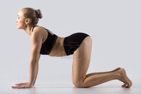 Photo for Sporty beautiful young woman practicing yoga, working out, doing backbend in Cow posture, Bitilasana, exercise for flexible spine and shoulders, asana paired with Cat Pose on the exhale, studio - Royalty Free Image