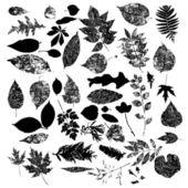 Leaf silhouettes set