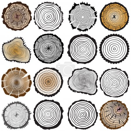 Illustration for Set of four tree rings icons. concept of saw cut tree trunk, forestry and sawmill. Isolated on white background. Logo design trendy modern vector illustration. - Royalty Free Image