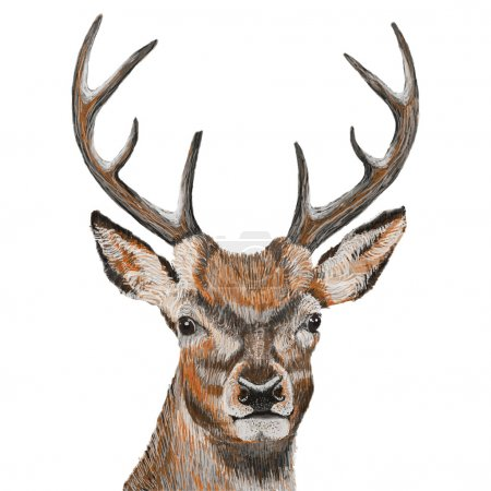 Illustration for Hand drawn Deer head - vector illustration - Royalty Free Image