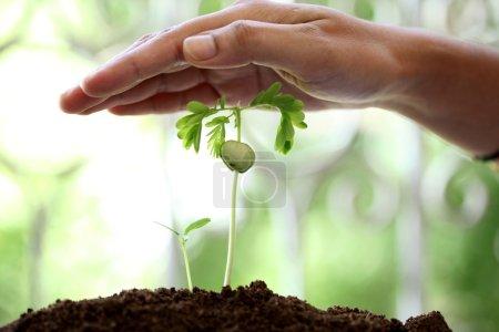 Photo pour Main protégeant une plante de bébé - image libre de droit