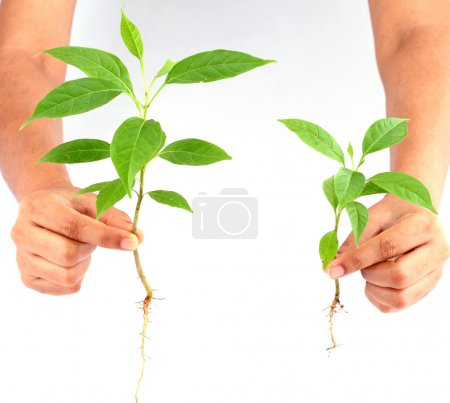 Hand holding green baby plant on white