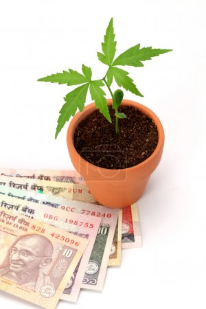 Indian currency and plant on white background