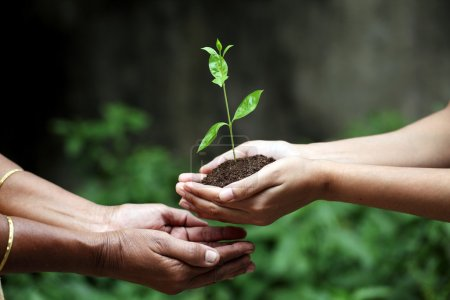 Photo for Young hands giving plant - Royalty Free Image