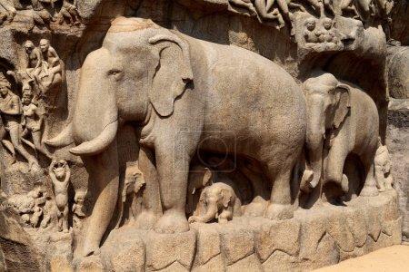 Photo pour Sculpture en bas-relief en Mammallapuram, Chennai, Tamilnadu, Inde - image libre de droit