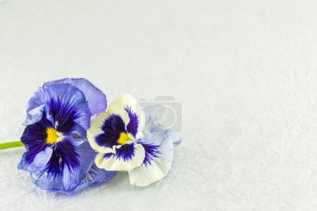 Violet flowers on white fabric