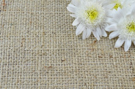Chrysanthema on a special knitted table cloth