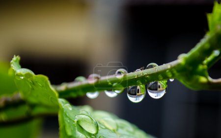 Water drops on plant with reflection
