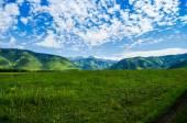 """Постер, картина, фотообои """"цветущая горная долина простирается в холмах в солнечный летний день"""""""