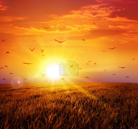 Photo for Intense sun setting down on a peaceful grass field with a flight of birds - Royalty Free Image