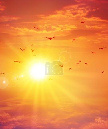 Photo pour Oiseaux de vol avant le soleil couchant dans un fond de ciel nuageux - image libre de droit