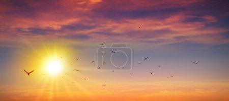 Photo pour Vol d'oiseaux dans un fond de soleil d'été haute résolution - image libre de droit