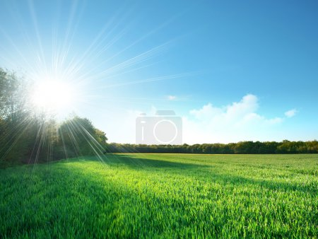 Green field under the sun