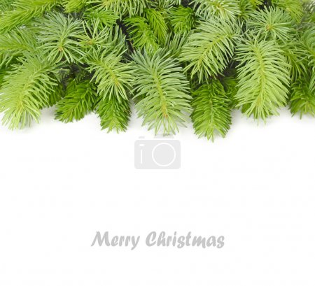 Fluffy branches of a Christmas tree on a white background. A Christmas background with a place for the text.