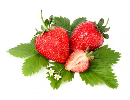 Ripe fragrant strawberry with flowers and leaves on a white background with a place for the text.