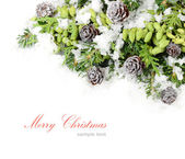 Branches of a Christmas tree and other coniferous trees with green cones and cones on a white background. A Christmas background with a place for the text.