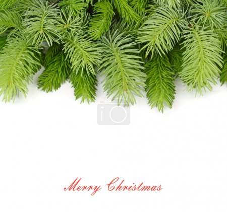 Photo for Fluffy branches of a Christmas tree on a white background. A Christmas background with a place for the text. - Royalty Free Image