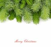 Nadýchané větve vánočního stromku na bílém pozadí. Vánoční pozadí s místem pro text