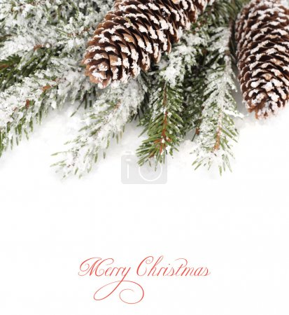 Cones on snow-covered branches of a Christmas tree. A Christmas background with a place for the text.