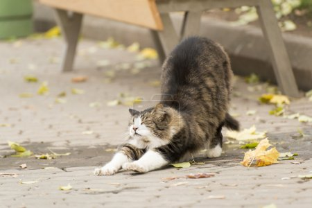 Cat stretching on a street