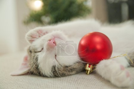 Christmas cat. Kitten under tree. Kitten sleeping on his back wit bauble. Christmas background and fireplace.