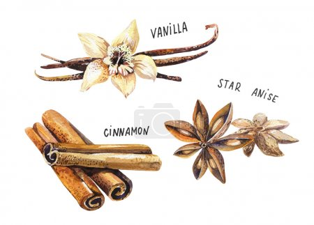 Photo for Set of spice, drawing by watercolor, hand drawn illustration. Watercolor hand drawn illustration with different spices - Royalty Free Image