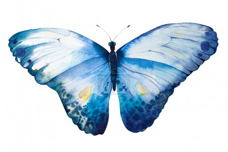Hand Painted watercolor butterfly.