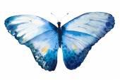 Ručně malované akvarel motýl