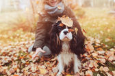child girl relaxing with her cavalier king charles spaniel dog