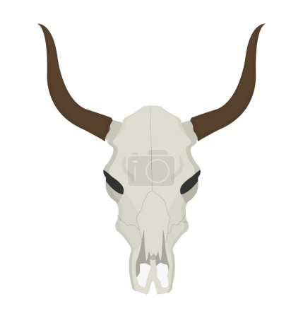 Illustration for Wild west cow skull with horns. Color vector clip art illustration isolated on white - Royalty Free Image