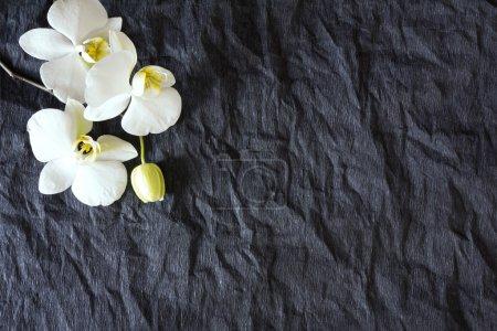 Photo pour Fleurs d'orchidée blanche sur un fond blanc - image libre de droit