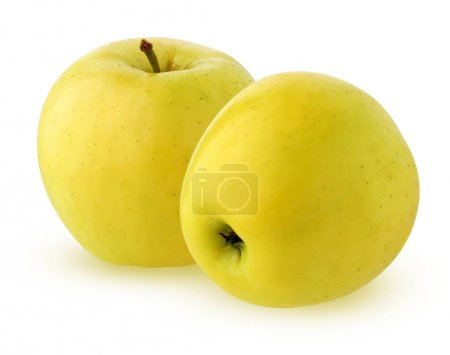 Photo for Isolated yellow apples. two whole fruits. ripe apples isolated on a white background with a clipping path. - Royalty Free Image