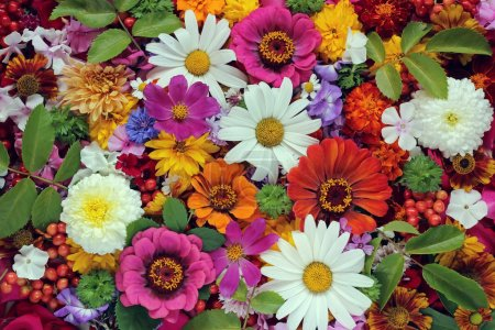 Flower background. A background from cultivated flowers.