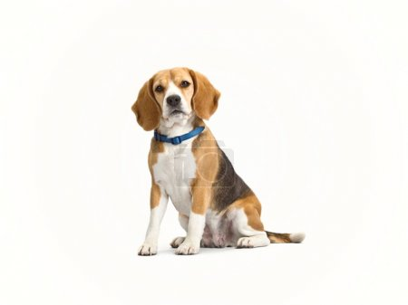 A dog sitting on a white background looked and mad...