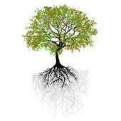 Vector illustration beautiful tree with green leaves and roots