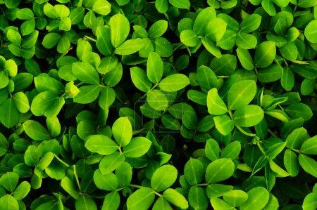 Foto de Textura de la planta de la naturaleza - Imagen libre de derechos