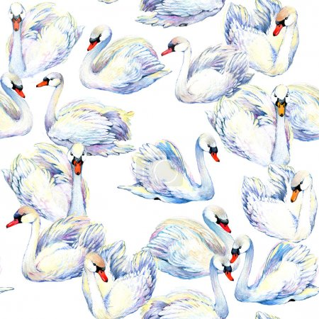 Swan. Swan Watercolor drawing. Swan flock. watercolor textured background. Watercolor bird. Watercolor seamless pattern.