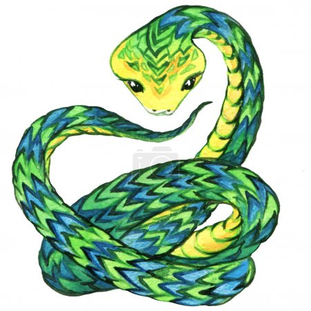 Snake. Snake watercolor drawing