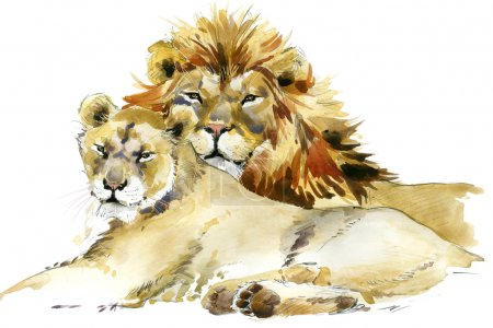 Lion. Lion pride watercolor illustration. Lion family