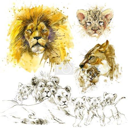 Lion pride illustration. Lion watercolor. Lion sketch. Lion family.