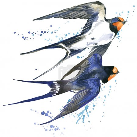 Swallow Swallow watercolor illustration Spring