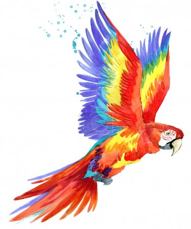 Parrot. Watercolor Parrot illustration. Tropical bird watercolor.