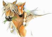 Akvarel koně maminka a děťátko