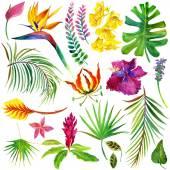 Trópusi levelek és egzotikus virág