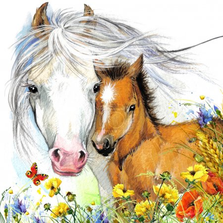 Horse and foal with meadow flowers. watercolor